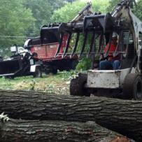 North Georgia Tree Removal