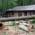 Smyrna Tree Removal