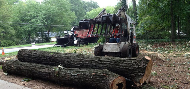 North Georgia Tree Removal Service - Apex Tree Company
