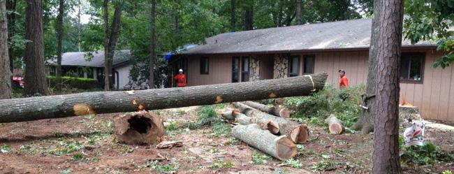 Smyrna Tree Removal Service - Apex Tree Company