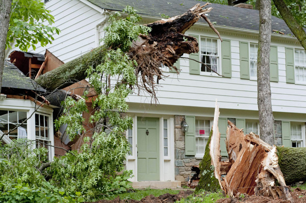 Emergency Tree Removal Service in Atlanta, GA - Apex Tree