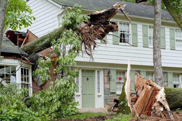 Emergency Tree Removal Service in Atlanta, GA - Apex Tree