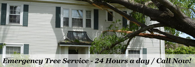 Atlanta Tree Removal Service