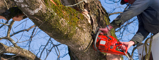 Marietta Tree Removal Service - Apex Tree Company