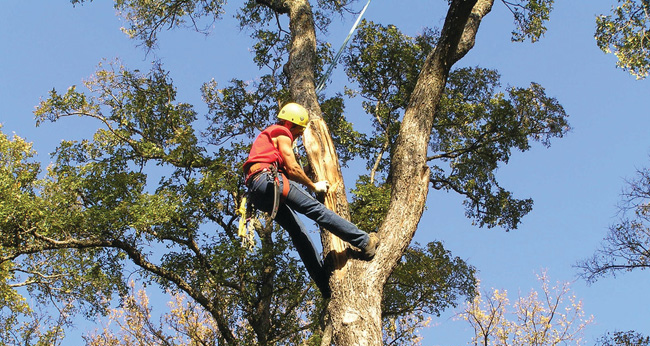 Atlanta Tree Trimming Company - Apex Tree Service