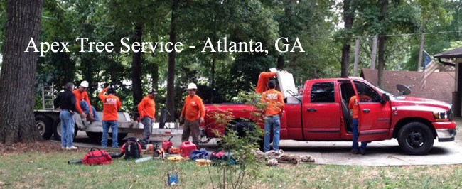 Apex Tree Service - Atlanta, GA Tree Removal