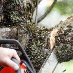Dunwoody Tree Service