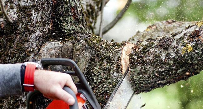 Dunwoody Tree Service - Apex Tree Service