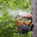 Johns Creek Tree Service