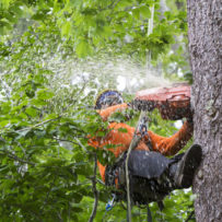 Johns Creek Tree Service