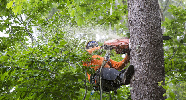 Johns Creek Tree Service - Apex Tree Atlanta, GA