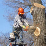 Roswell Tree Service
