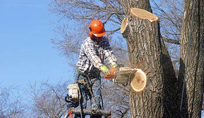 Roswell Tree Service - Apex Tree Company in Atlanta, GA